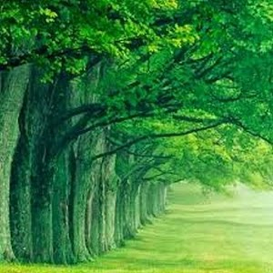 Green Nature HD Wallpaper