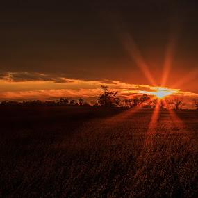 Amber Fields at Dawn by Troy Snider - Landscapes Prairies, Meadows & Fields ( first light, field, farm, light rays, dawn, sunstar, light beams, sunrise )