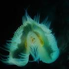 Bristleworm