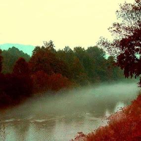 Misty Forest by Nat Bolfan-Stosic - Landscapes Forests ( red, fog, forest, misty, river )