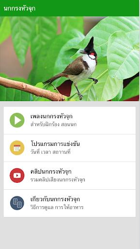 นกกรงหัวจุก