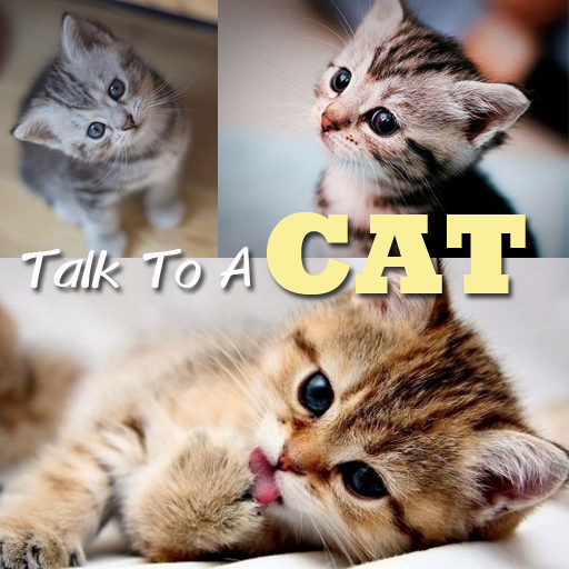 Talk to a Cat