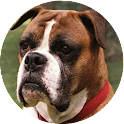 Boxer HD Wallpapers icon