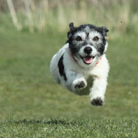 Freedom to run..  by Mark Milham - Animals - Dogs Running