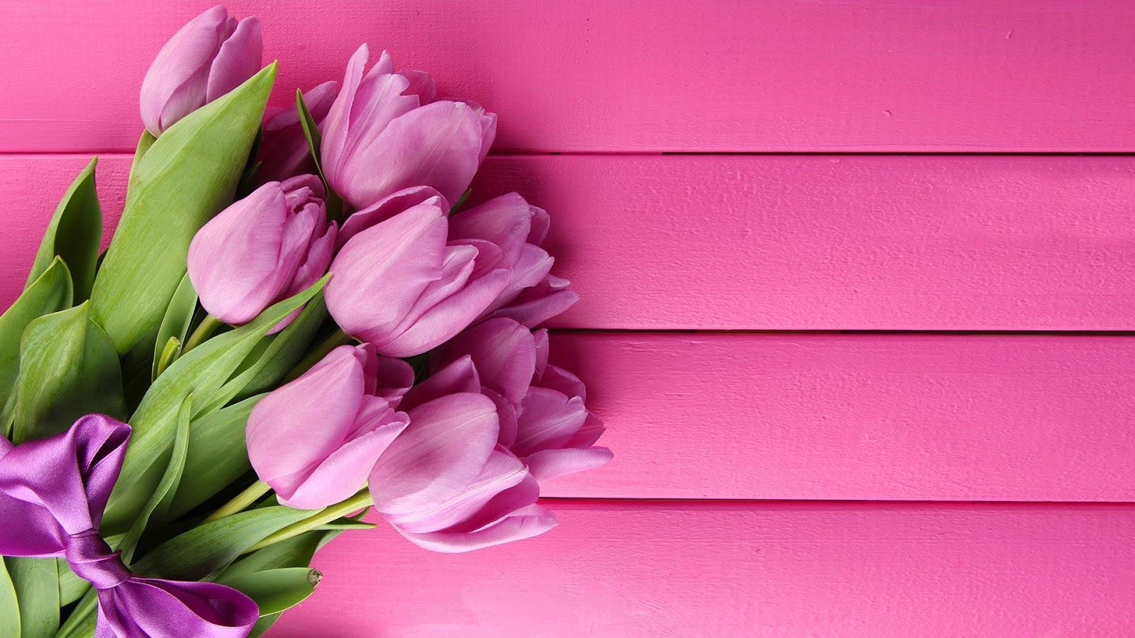 Tulip Pink Wallpaper