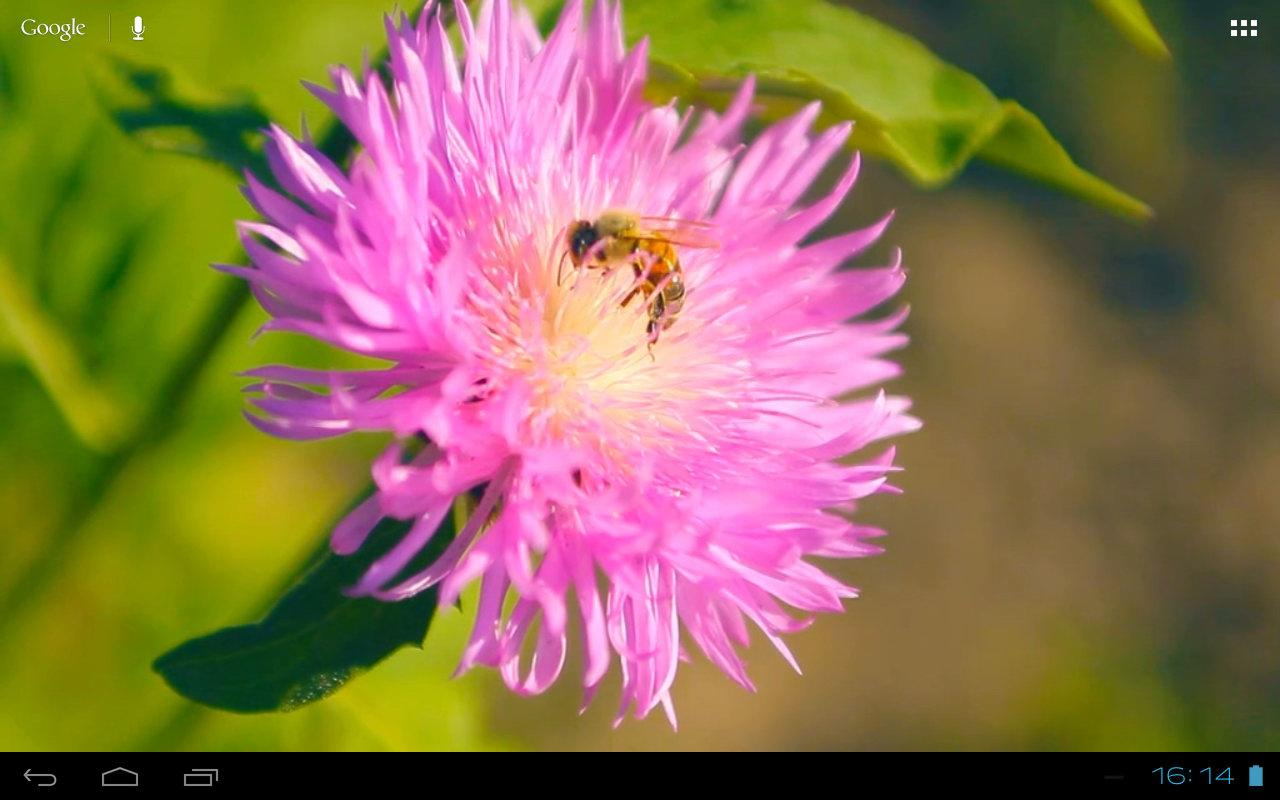 3D Bee on a Clover Flower Free - screenshot