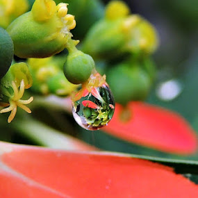 A Drop of Life by Pritha Gupta - Nature Up Close Natural Waterdrops ( macro, reflection, nature, waterdrop, flower )