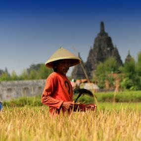 petani di prambanan by Mas Bagus - People Professional People ( #natur #men #landscape #rise #farmer )