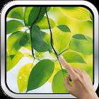 Green Leaves HD Wallpaper icon