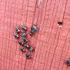 Florida Stink Bug Predator