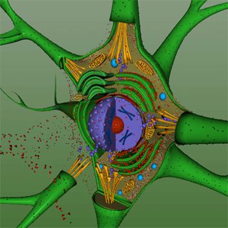 EON 3D Neuron Structure