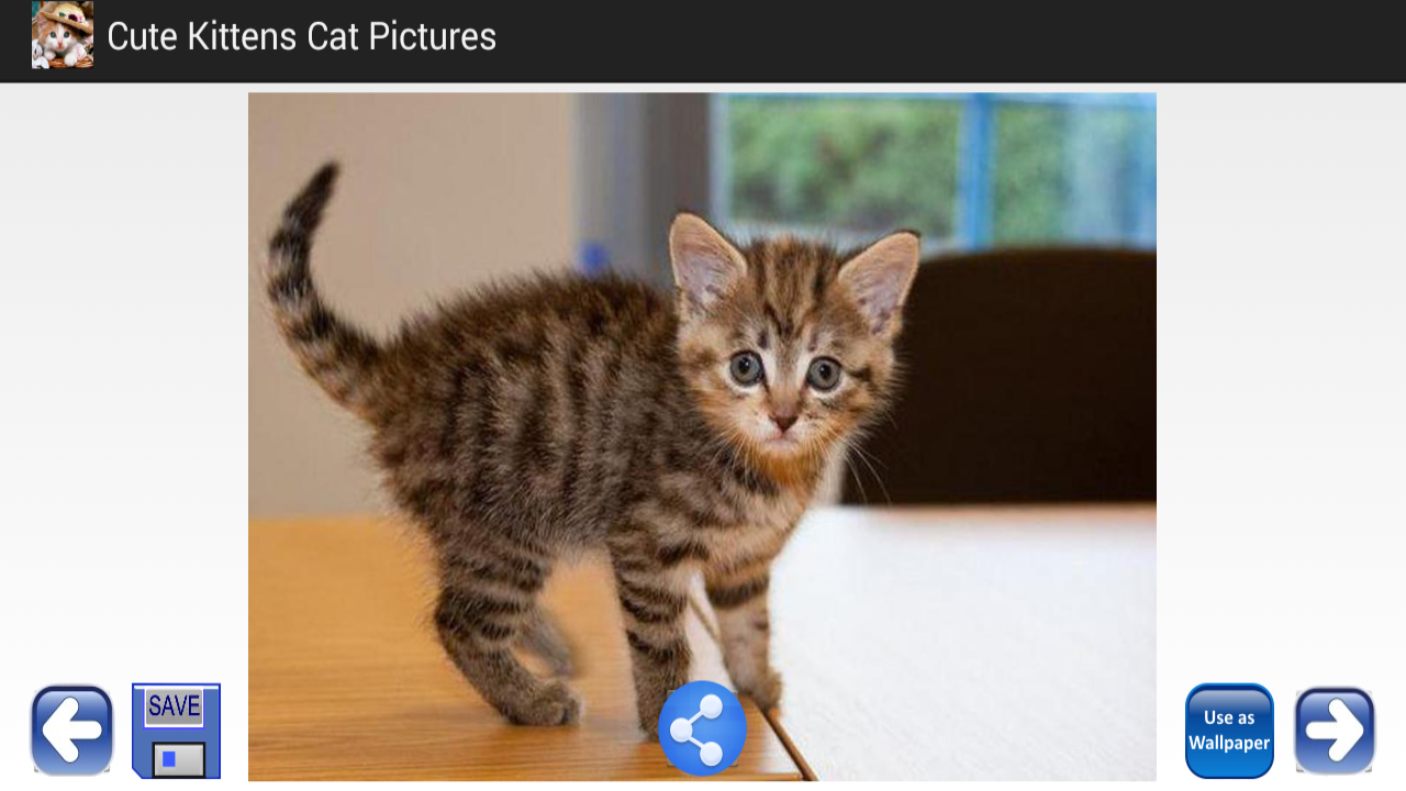cute kittens cat pictures android apps on google play