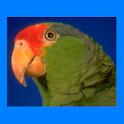 Transclick Translator Parrot logo