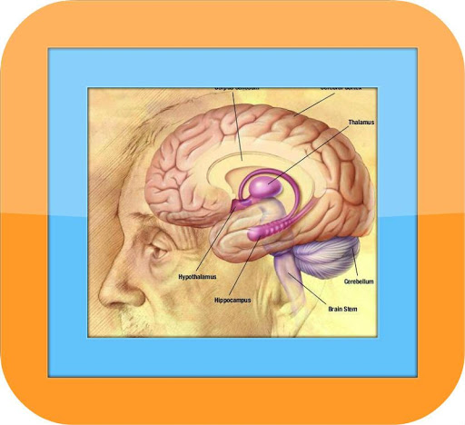 Alzheimer Disease Symptoms