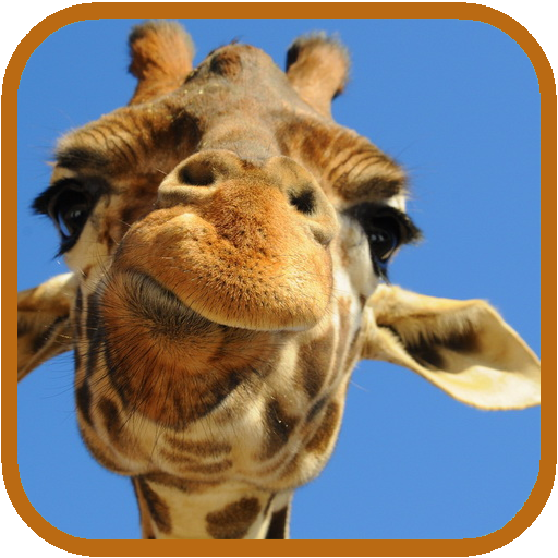 Giraffe HD. Live Wallpaper LOGO-APP點子