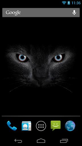 Black cat eyes live wallpaper