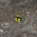 yellow mantella frog