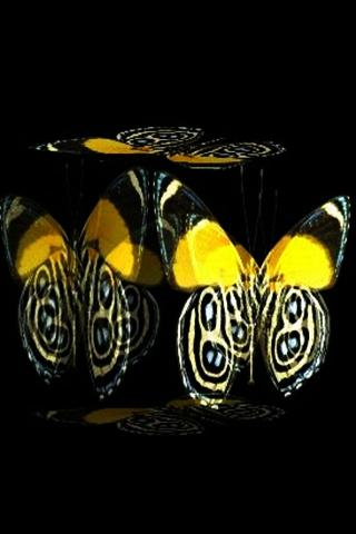 3D butterfly 2 - screenshot