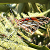 Gulf Fritillary with closed wings.