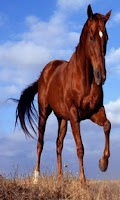 Screenshot of Pocket Horse - Free
