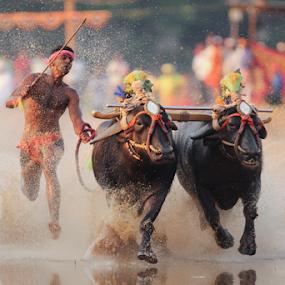 Fast And Furious by Prithiviraj Kiridarane - News & Events Entertainment ( sports, fast, run, race, entertainment,  )