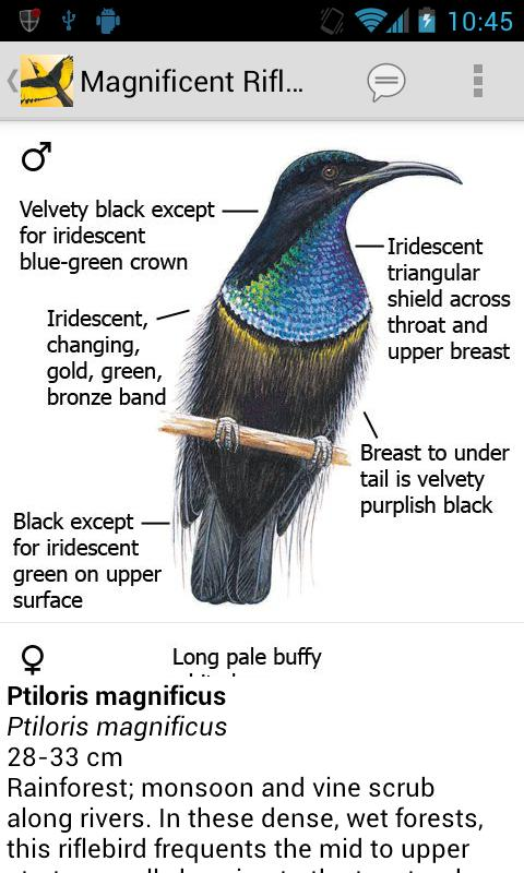 Morcombe's Birds of Aus (Lite)- screenshot