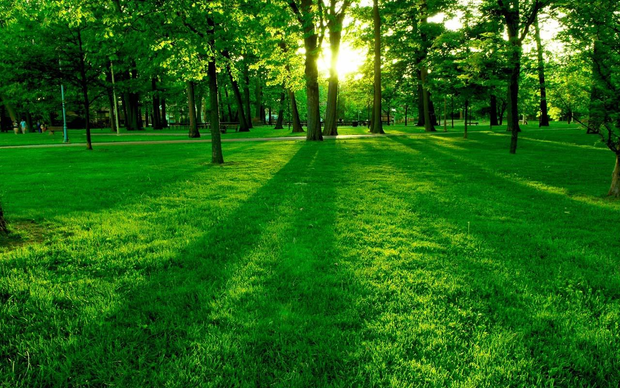 Green Forest HD Android Apps On