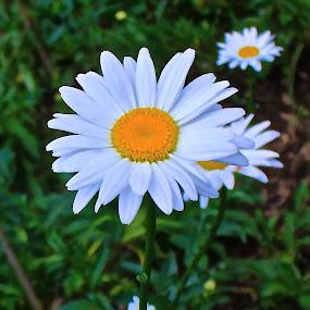 by Ekky Sinting - Flowers Single Flower