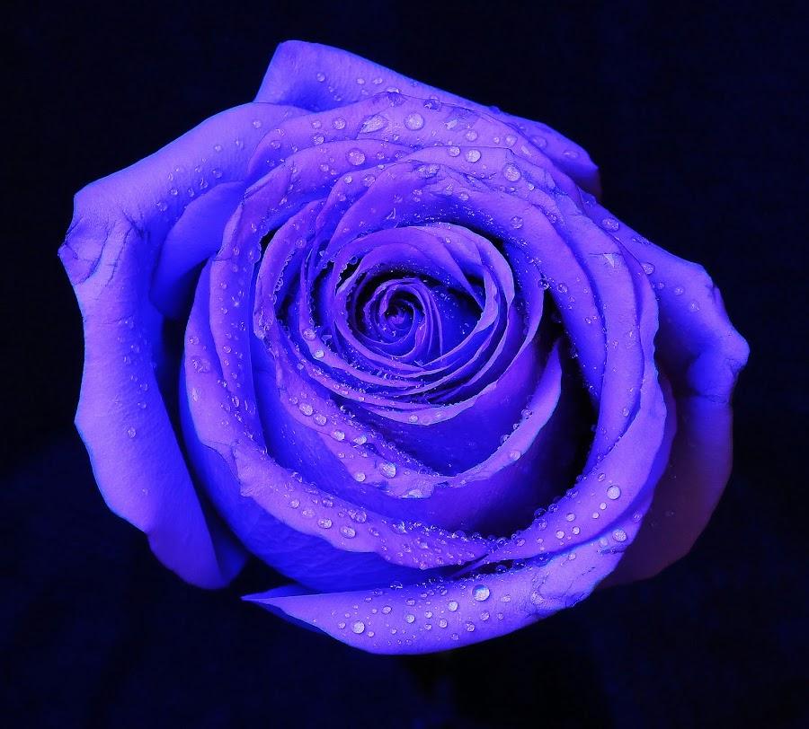 by Martin Dunaway - Flowers Single Flower (  )