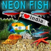 Bubbling Neon India Fish HD