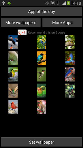 Birds Wallpapers for WhatsApp