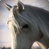 Free Horse Wallpapers HD