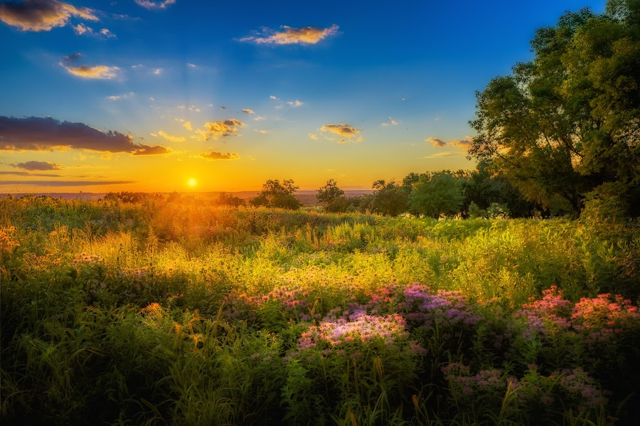 Dream On by Mark Goodman - Landscapes Sunsets & Sunrises ( spring colorful flowers, hdr, sunset, sun coming through wildflowers, surreal, landscape, spring lake park, hastings )
