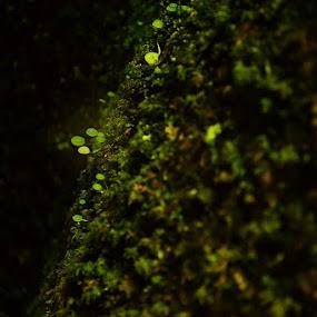 by Delphine Jourdren - Nature Up Close Leaves & Grasses