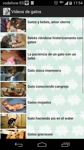 Videos gatos