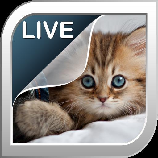小貓動態壁紙 個人化 App Store-癮科技App