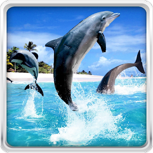 Δελφίνι HD Εικονες Για Φοντο APK
