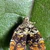 Metalmark moth