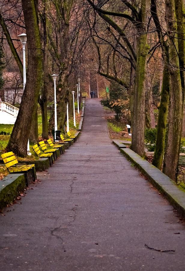 Deva by Eduard Andrica - City,  Street & Park  City Parks (  )