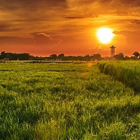 by Rupam Chakraborty - Landscapes Sunsets & Sunrises ( nature, village, autumn, landscapes, fields,  )