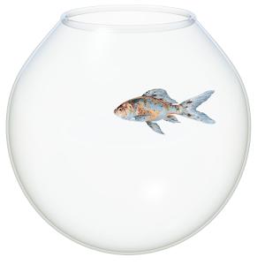 Bowl full of fish dating