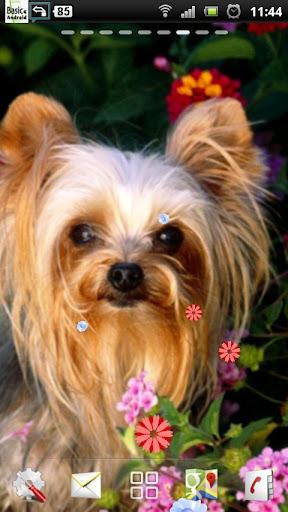 無料个人化Appのヨークシャーテリア犬LWP|記事Game