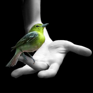 鳥壁紙 生活 App LOGO-APP試玩