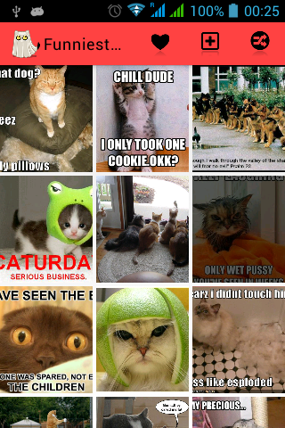 Funniest Cats Ever
