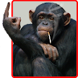 Funny Monke.. file APK for Gaming PC/PS3/PS4 Smart TV