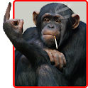 Funny Monkey Live Wallpaper icon