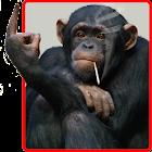 Divertido Mono Fondo Animado icon