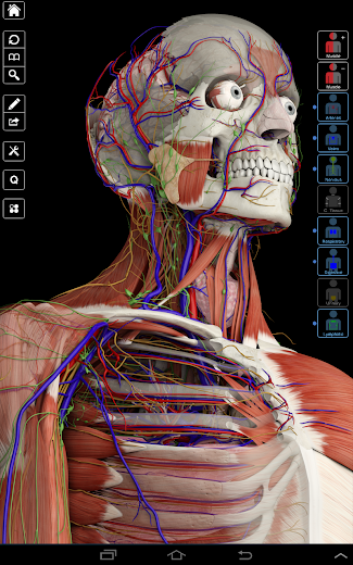 Anatomia Essencial 3 - Screenshot