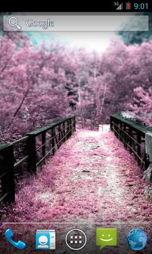 The Sakura Garden