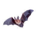 Bat Sticker icon